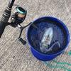 【エギング】初心者がアオリイカを釣るまで ③最初の一匹