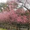 熊本に巡回~もうすっかり春です