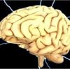 """脳に電気刺激を送って""""アルツハイマー病""""の進行を遅らせることができる可能性の発見!"""