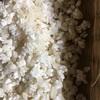 味噌作り 米こうじ作り