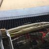 山口の海で養殖したウナギを自分で網焼き!〜下関、畳バーベキュー流王さんにてウナーもといウマー。