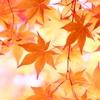 箱根紅葉いつ行くのがいい?おすすめスポットと温泉で疲れを癒す旅!