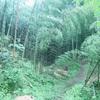 【やってみた】世界遺産の竹林で竹を切ってみた!【DIY・茶道・煎茶道具】
