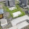 母と恒例のお墓の掃除に行ってきました。