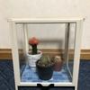 セリアの素材で作る少し変わった簡易温室の作り方~基本材料費はたったの1080円!~