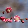 2月中旬:多摩川周辺をお写んぽ 。その4 岡本公園民家園から用賀駅へ