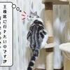 猫雑記 ~キャットタワー渋滞中~