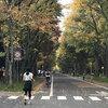 【超日記】北海道大学に紅葉を見に行ってきました的な話【まだ早かった】