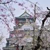 🏯大阪城と桜🌸