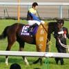 【府中牝馬ステークス】追い切りチェック2016