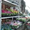 大寒の日のお花屋さん