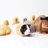 【癒しのペット】一人暮らしでも飼いやすい!初心者おすすめのモフモフな小動物5選!