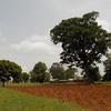 アフリカの村ってどんな感じ?-ベナン、オタマリ族の村-