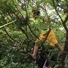 サンダル履きの少年が木に登ってる…