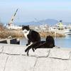 【人体実験】ネコアレルギーの人間が猫の島にいってみた 1