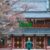 桜とお寺の素敵なコンボ 蓼科 聖光院【長野ドライブ】