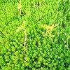 多肉植物の土は深さ2cmで十分。