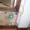 2階浴室ドア枠からシロアリが出てきた