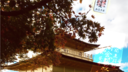 【京都観光】紅葉の時期の金閣寺はやっぱり圧巻だった