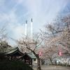 千葉県木更津市太田山公園桜20180326