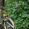 願い事:自転車通勤、通学雨でも平気なレイングッズください