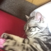 きゃわーーーー♥子猫時代のプルちゃん