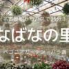 名古屋駅からバスで35分!自粛明けの【なばなの里】(ベゴニアガーデン・バラ園)