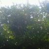 木陰には蜘蛛の巣