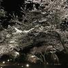 23日から伊東 伊豆高原さくらの里で桜がライトアップされます