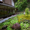 京都・古知谷 - 九輪草咲く阿弥陀寺