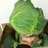 「春野菜」届きました!