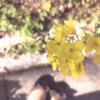 菜の花と靴