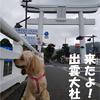 【わんこと旅】 (10月)出雲大社!【島根県】
