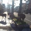 ♬4月の奈良町情報館 朝市 鹿も楽しみ?!