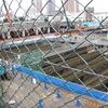 [地域] 東海道品川宿(6-6)歩行新宿、品川神社と東京サウスゲート計画の進捗。