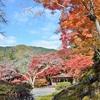 【2019】京都の紅葉のおすすめ場所、第1弾「白龍園」