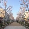 【鎌倉】鶴岡八幡宮段葛の桜、満開までもう少し(2018年3月29日)