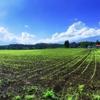 「半農生活をはじめよう」を読んで大きな可能性を感じた。