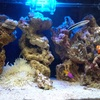 【アクアリウム】 海水魚水槽と水流