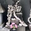 お礼参りに貝の首飾りをいただく 津久井の岩船地蔵さま(横須賀市)