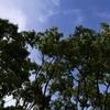 進め!俳句ビギナー㉔。「青空に緑が浮き立つ風景に『俳文』を想う。季語集をめくりながら日常が包んで育む情愛を探してみる」の巻。