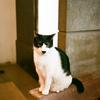 女ひとり台湾猫旅~猫カフェ「極簡」にて~