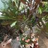 オレンジ色の可愛いいサンブリテニアの寄せ植えです♡