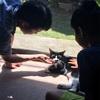 【猫のときわ:ご近所さんになつく】
