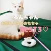 ろんちゃんお気に入りおもちゃBEST3♡ 猫が本当に好きなおもちゃとは?!