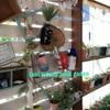 パーゴラに蔓性植物を這わせよう ジャンクガーデン