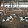福島で置き去りにされた動物たちの悲劇