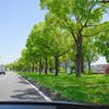 楠の並木の緑がキレイだったので