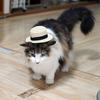 O次郎 カンカン帽