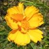 道端の花11